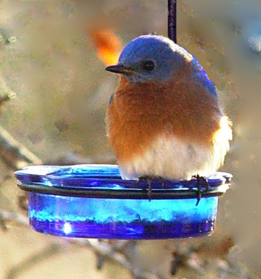 MWFWH - Hanging Glass Cup Feeder - Blue - Click Image to Close