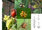 Fruit Feeders