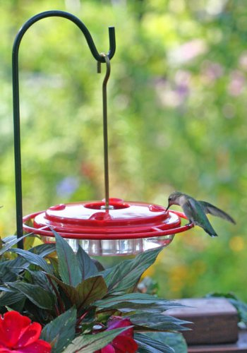 com glass zoom green antique hanging duncraft hummingbird feeder