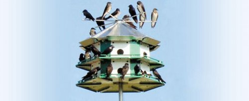Pleasant Purple Martin Products Nature House Catalog Home Interior And Landscaping Ferensignezvosmurscom